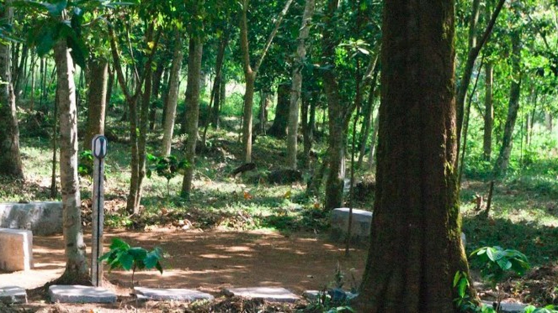 Three Wooded Acres, Coorg